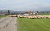 bc-schluchsee-08-11-2014-2